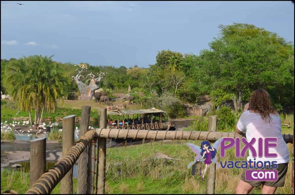 wild african safari disney